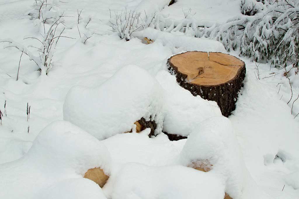 Vermont windstorm